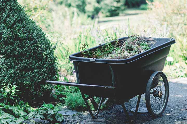 Garden Care  devon