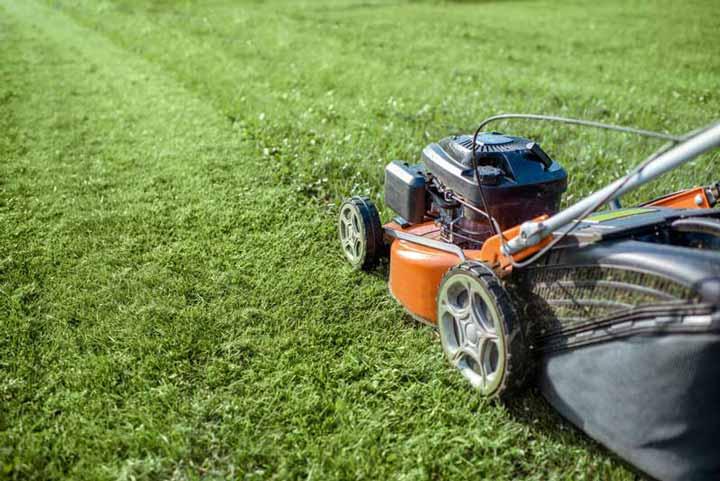 Lawn Mowing services in Devon